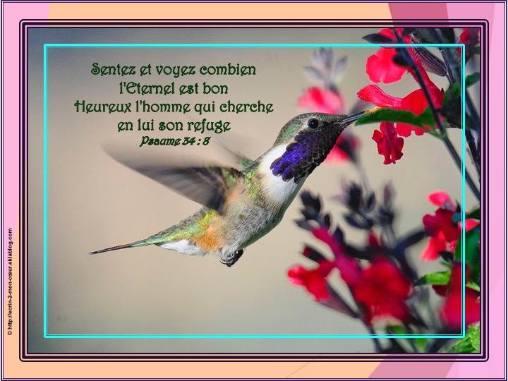 L'Eternel est bon - Psaumes 34 : 8