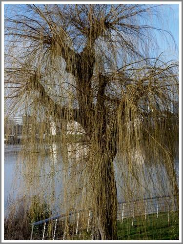 La Loire au sud de Nantes