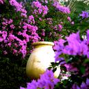 La jarre fleurie de l'Habitation Clément - Photo : Karin