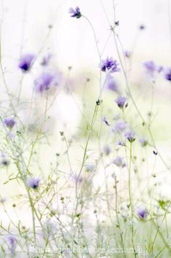 """Résultat de recherche d'images pour """"GOOGLE IMAGE centerblog fleurs suaves dessinées"""""""