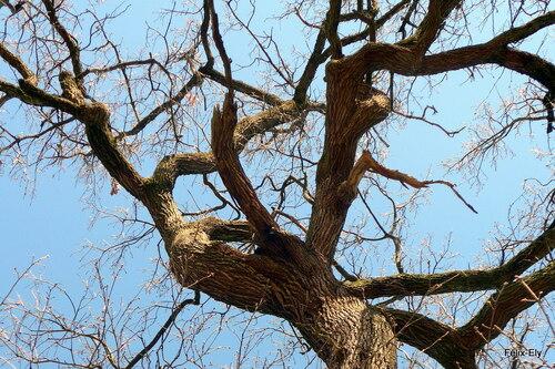Des branches !