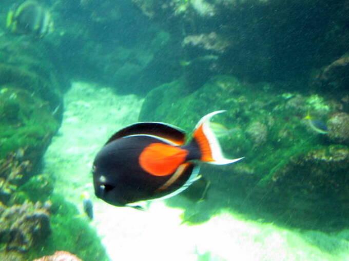 Les petits poissons dans l'eau.....