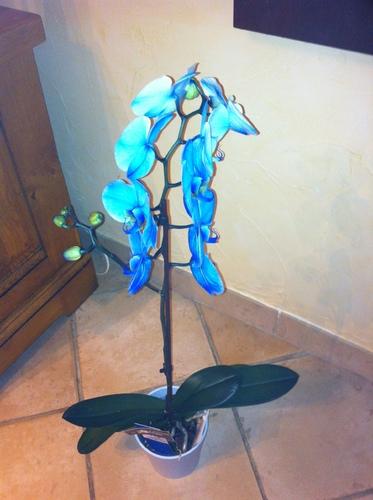 Une très belle orchidée