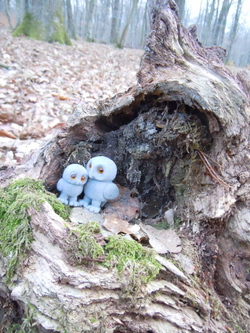 Petite promenade en forêt