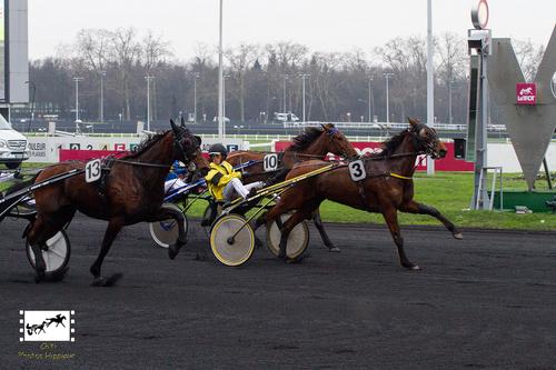 Prix du Lion d'Angers