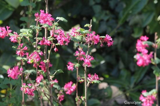 Jardin-friandises...