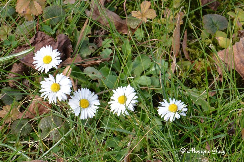 Sur les chemins fleuris