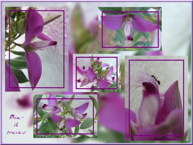 Fleurs de mon jardin Djerbien