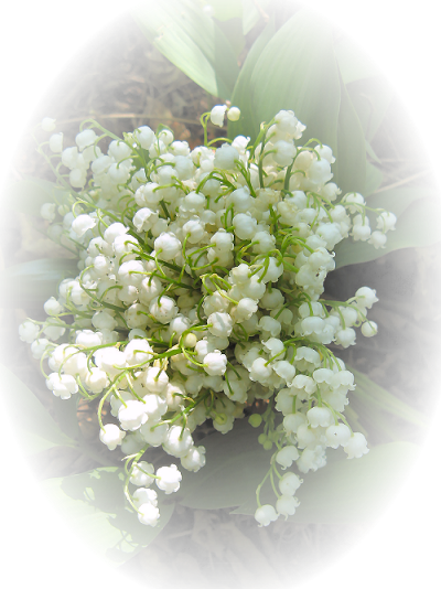 Virágok - Gyöngyvirág