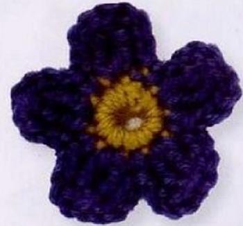 Meconopsis Pavot Bleu