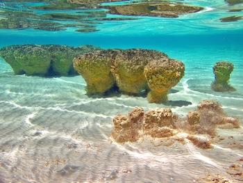 stromatolites1