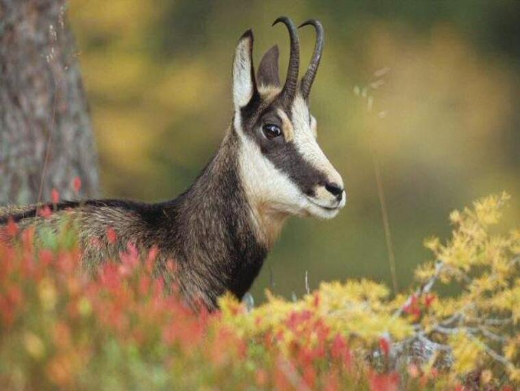 la faune et la flore et nos animaux