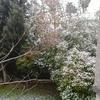 Neige dans le jardin février 2015