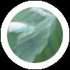 Côte de Jade - The Origins