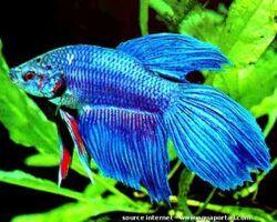 Je vous présente Blue
