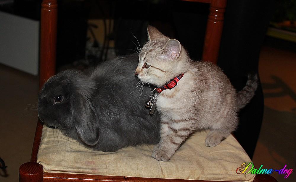Happy le copain lapin de Haya rencontre Mekee