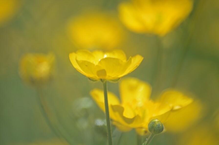 Fleurs-12-2325-copie-1.jpg