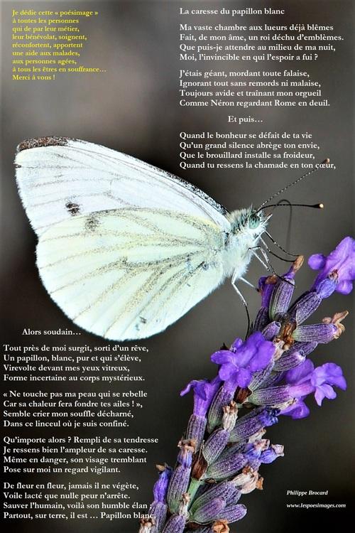 La caresse du papillon blanc