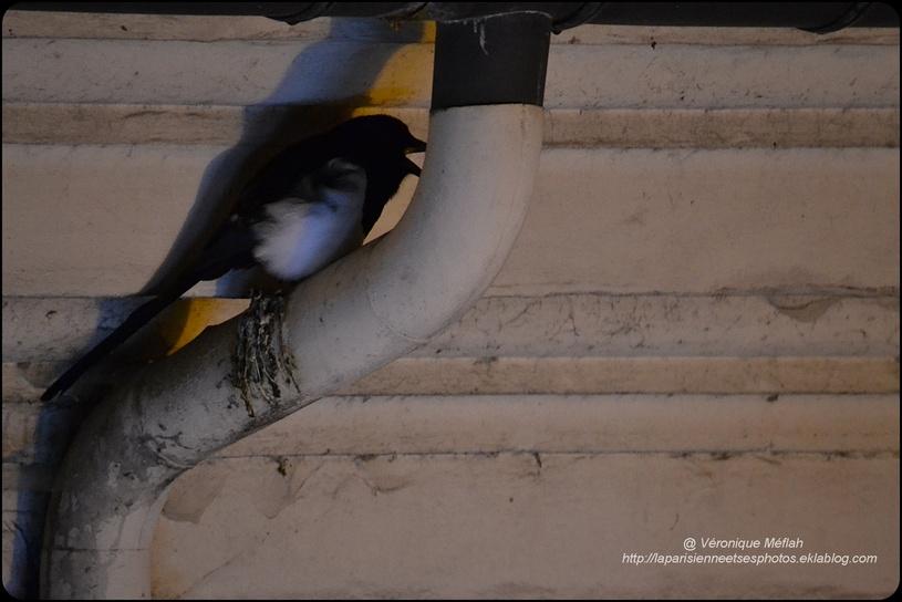 Rambouillet : Les oiseaux en hiver