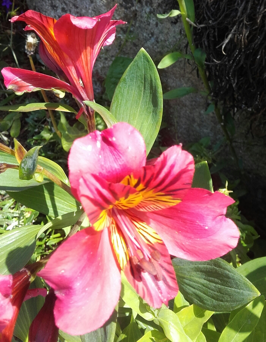 Juin fleuri