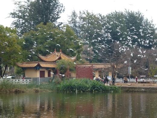 Le parc de Kunming