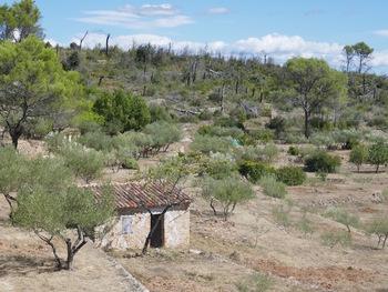 Cabanon, oliviers, et ... restes d'incendie