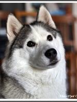 Luna (5 ans)