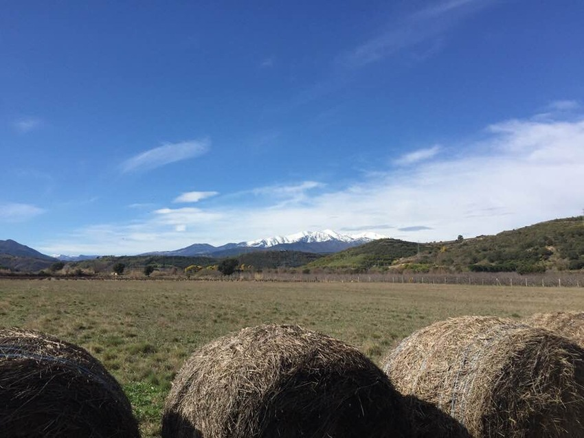 Le Mont Canigou