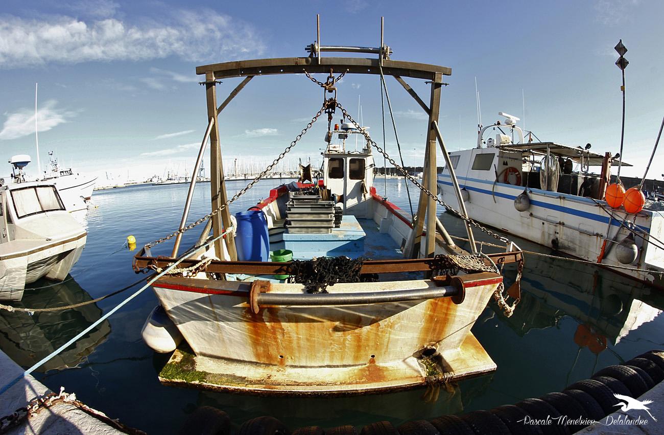 Sur le port de Sète