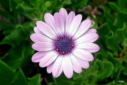 Superbe fleur !