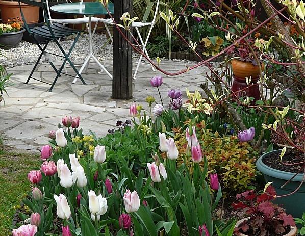 Tulipes-09-04-12-013.jpg