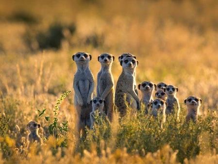 Résultat d'images pour suricate animal