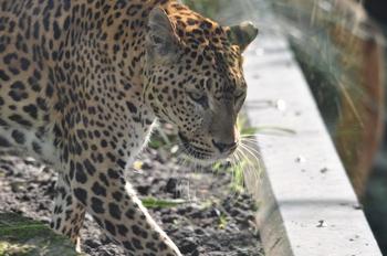dierenpark emmen d90 110