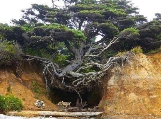 arbre accroche