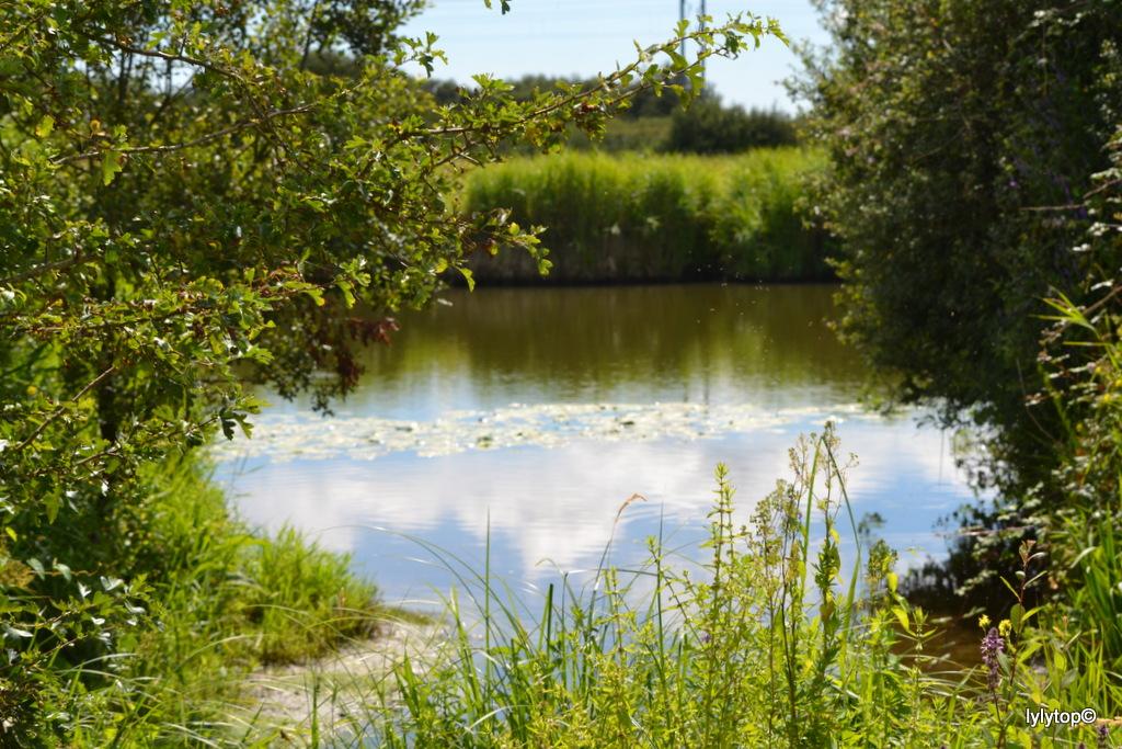 """La maison du parc """"Parc naturel régional des Marais du Cotentin et du Bessin """" (3)"""