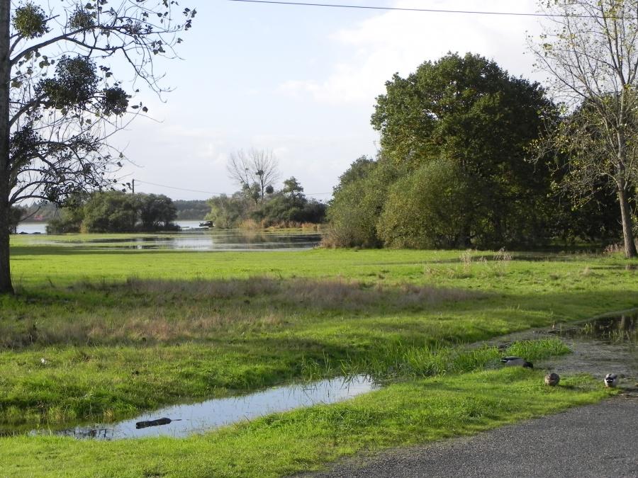 Le lac Grand-Lieu en Loire Atlantique