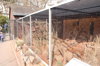 zoo cologne d50 2012 196