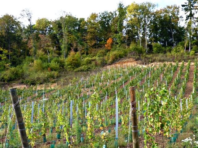 Vaux Moselle vignes 8 16 02 2010