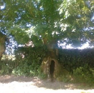 L'arbre de l'année 2013 en Haute-Normandie
