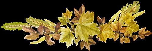 """Résultat de recherche d'images pour """"separateurs de texte fleurs automnes"""""""