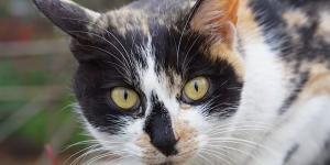 Pourquoi dit-on que les chats ont 7vies