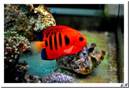 Achats de coraux et poissons