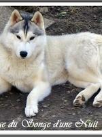Nouchka (17 mois), lors d'une visite à l'élevage