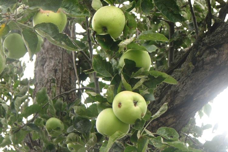 Ingersheim : Plantes et fleurs du jardin