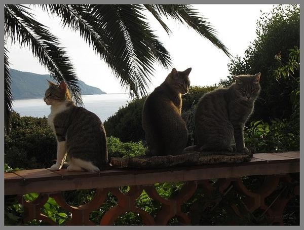Apache, Charly & Verlaine
