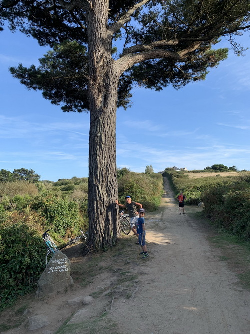 mon arbre à Groix