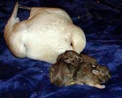 Un centre de réadaptation pour animaux