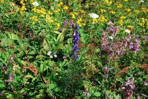 Une magnifique pelouse alpine