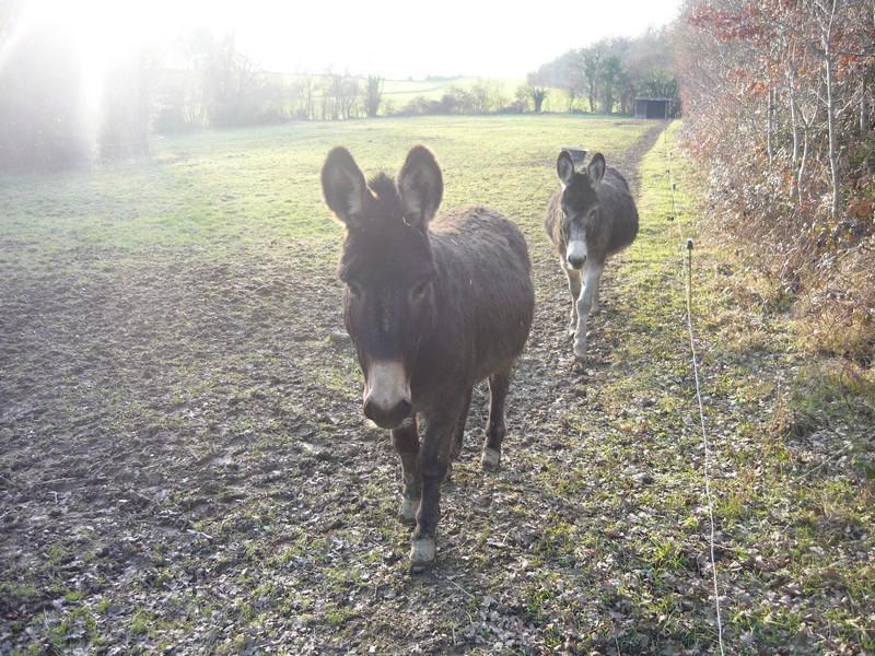 Les ânes (pas culottés)