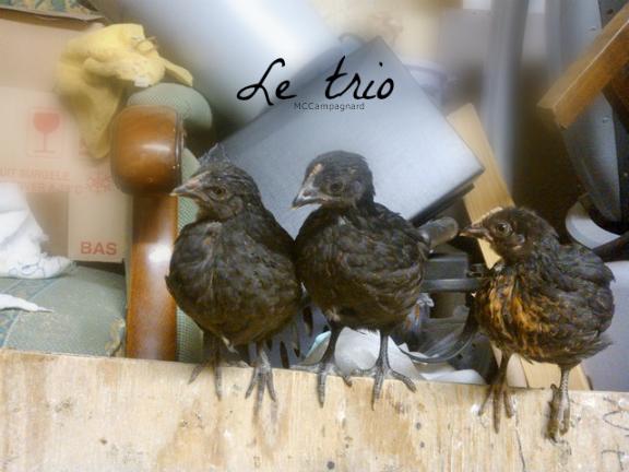 Histoire de Coco et ses petits coquins.